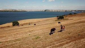 50 değil 100 at: 1'i öldü 99 at kayıp