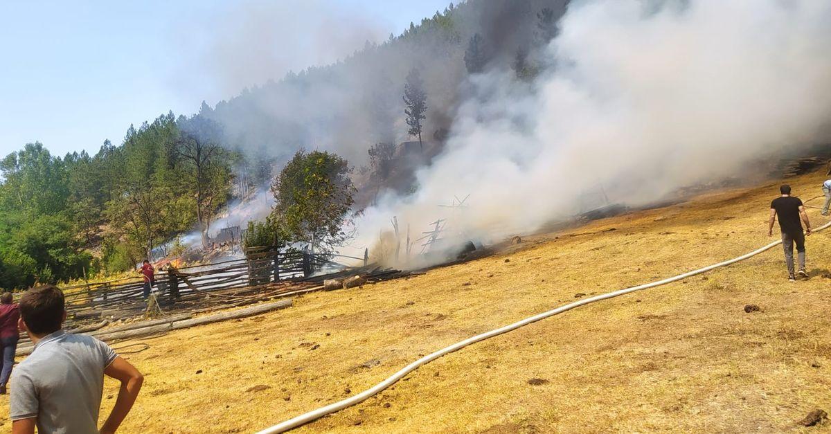 Balıkesir'de korkutan orman yangını!