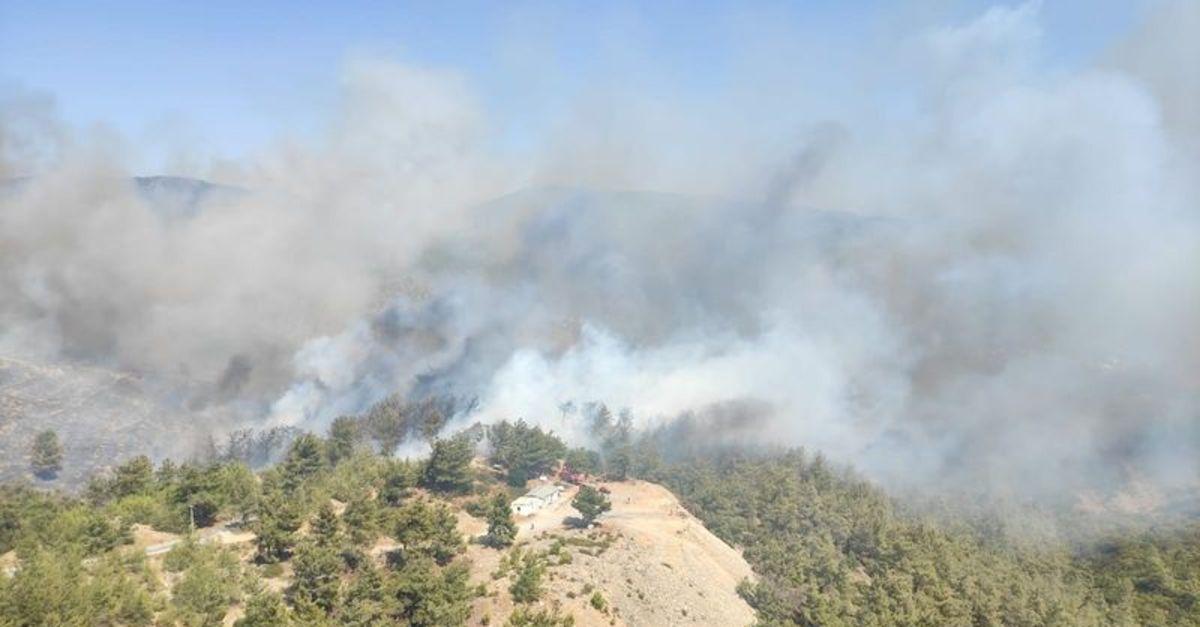 Bodrum ve Milas'ta orman yangını!