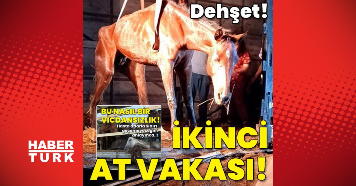 Dehşete düşüren ikinci at vakası!