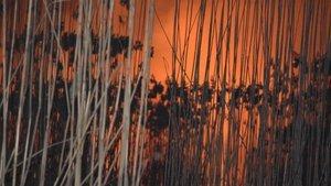 Eber Gölü'nde korkutan yangın!