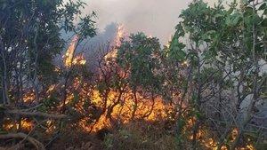 Elazığ'da orman yangını...Çok sayıda ekip sevk edildi