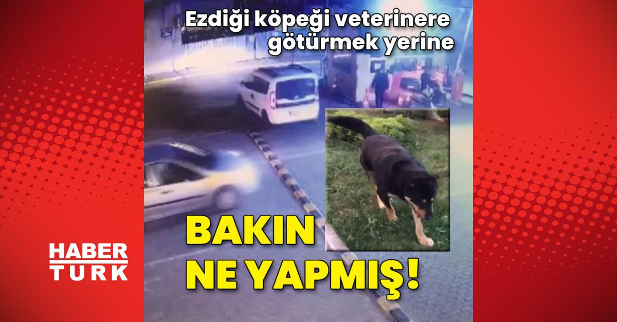 Ezdiği köpeği veterinere götürmek yerine bakın ne yapmış!