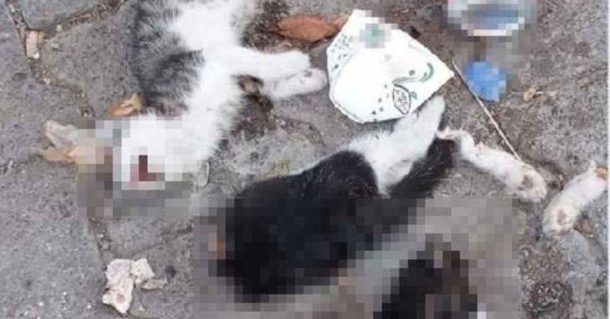 Giresun'da iki yavru kedi korkunç bir şekilde katledildi