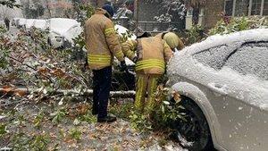 İstanbul'da otomobillerin üzerine ağaç devrildi