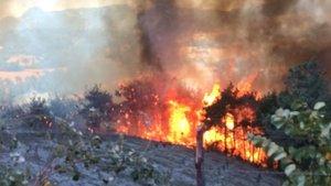 İzmir ve Adana'da korkutan orman yangınları!