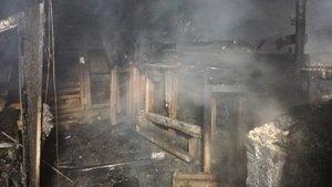 Kümeste çıkan feci yangında 250 hayvan öldü