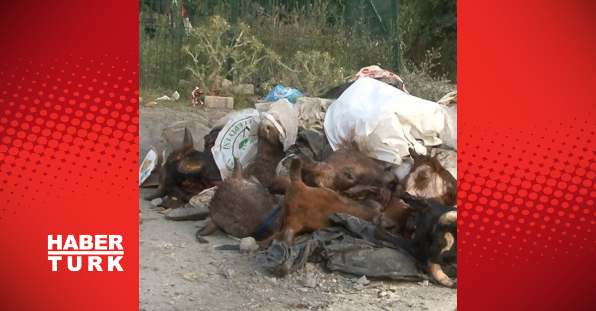 Kurbanlık hayvanların kafalarını yola attılar