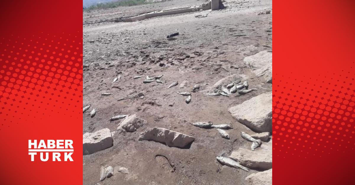 Sarıoğlan Barajı'nda kırmızı alarm! Balık ölümleri başladı