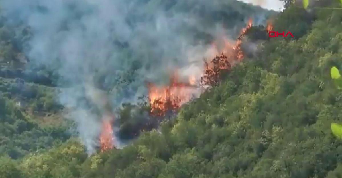 Sarıyer'de orman yangını çıktı!