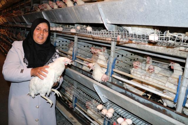 Tarım ve Orman Bakanı Bekir Pakdemirli, tavukları telef olan kadın girişimciye verdiği sözü tuttu