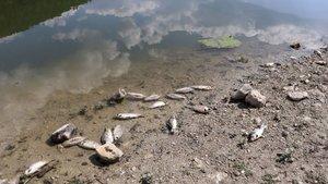 İki ilde endişelendiren balık ölümleri