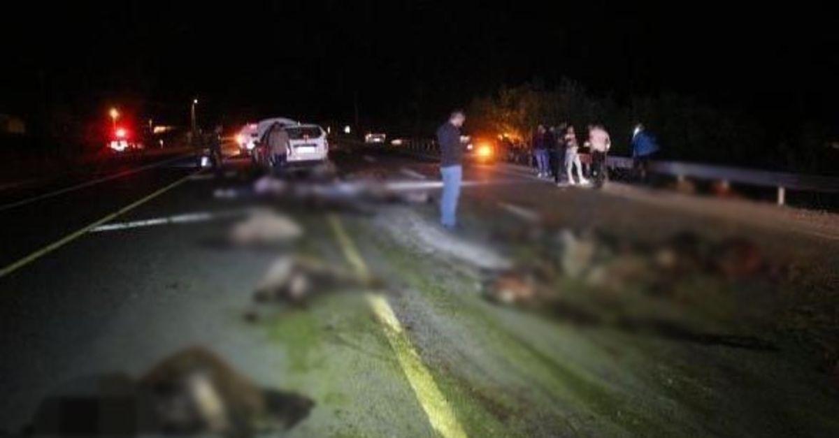 İki otomobil koyun sürüne daldı: 40 koyun öldü