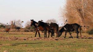 Kayıp atlarla ilgili yeni iddialar!