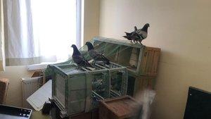 Kontrolden kaçıp evde yakalandılar!