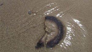 Kuşadası kıyılarına ölü denizanaları vurdu