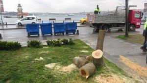 Üsküdar'daki ağaç katliamına ders gibi karar!